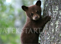 Cute Bear macis kirakós játékok