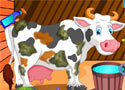 Holstein Cow Care