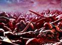 Battle for Alandria Online Játékok