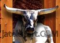 Bucking Bull Racing játék