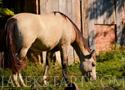 Jigsaw Horse Grassing rakd ki a lovat