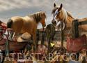Midnight Cowboy találd meg a tárgyakat