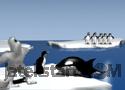 Orca Slap játék