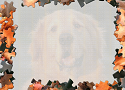 Pet Puzzles: Dogs